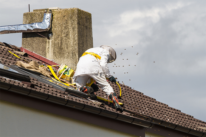 Bee Pest Control in Oldham Greater Manchester